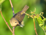 LOTHIAN BIRDS 2019