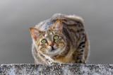 My neighbor's cat