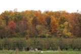 A colorful hillside near Catoctin Mountain Park