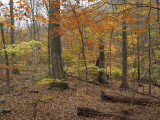 Woods at Catoctin Mountain Park