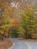 The road into Catoctin Mountain Park