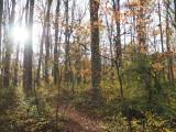 The trail trrough Seneca Park