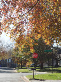 Our neighborhood at the end of the fall