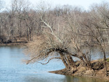 A corner of the Potomac and the Monocacy rivers