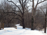 February 21st - View of trail from Rileys Lock