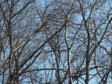 A tangle of branches in the woods