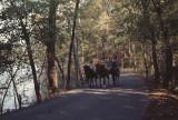 horsing around Radnor