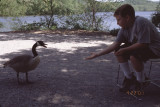 boy and goose RL