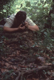 photographing a box turtle RL