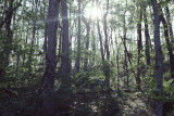 forest at Radnor