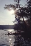 Radnor Lake scene
