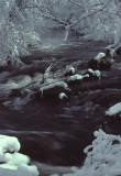 snowy stream scene