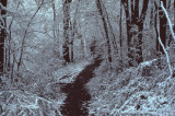 trail with snow RL