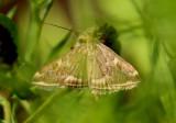 4618-5509 - Zygaenidae through Crambidae