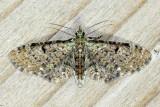 Family Geometridae - Geometer Moths