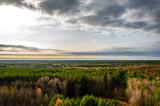 Pripyat Forrest