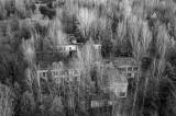 Pripyat Forest 1