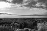 Pripyat Forest 2