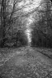 Pripyat - Forest/Street