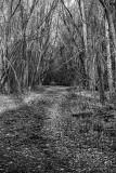 Chernobyl - Secret Base Forest