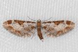 7601 (Eupithecia nevadata)