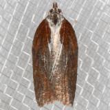 3531 (Acleris hastiana)