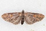 7600 (Eupithecia graefii)