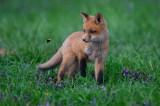 fox_2019