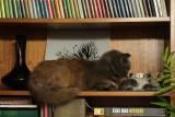 Cat snaps