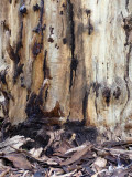 bark_and_leaves