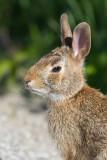 rabbit 19