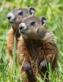 groundhog 9