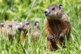 groundhog 10