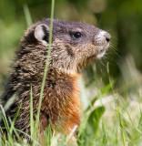 groundhog 11