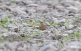 Latest bird pictures