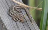 Mammals, Reptiles, Amphibians & Fishes