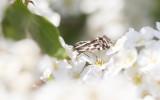 Moths in Sweden