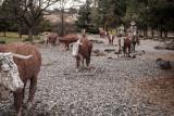 Cattle Drive Sculpture