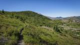 Harry's Ridge Trail