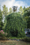 Ivy Bear Topiary