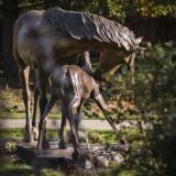Bronze Art Walk