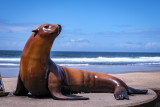 Joe the Sea Lion Statue