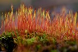 Wild Flora, Mosses and Lichens