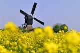 Noordeveldse molen