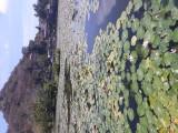 Lotus Lagoon. Candi Dasa