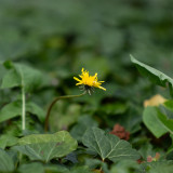 eduard-lampe-flowers-2021