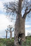 Baobab Tree, Mandrare  1