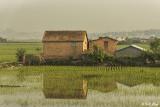 Antananarivo Rice Paddies  3