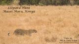 Leopard Hunt Slide Show Masai Mara Kenya