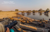Elephant Hide Time Lapse